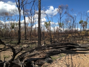 Burnt out country Etheridge Shire FNQ - fires late in 2012 caused major damage - pic by Charlie McKillop