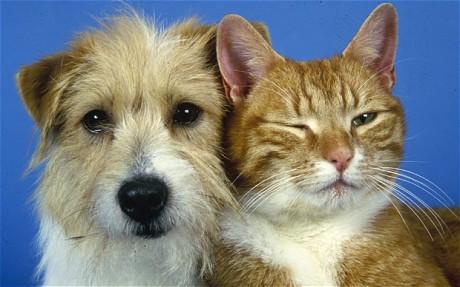 dog-cat_1838650c