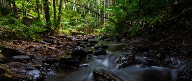 DAINTREE - THE WORLD'S OLDEST RAINFOREST (pic courtesy Daintree Discovery Centre